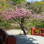 Kamakura, Tsurugaoka Hachimangu Heike Pond