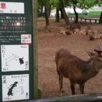 Japonia, Nara, jelonki