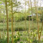 Japan, Himeji, Kokoen Garden, garden of bamboo