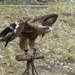 Kazakhstan - the country of the wind hunting with the eagle