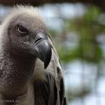 Japan, Tokyo, Ueno Park, Ueno Zoo