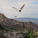 Kapadocja - Pigeon Valley