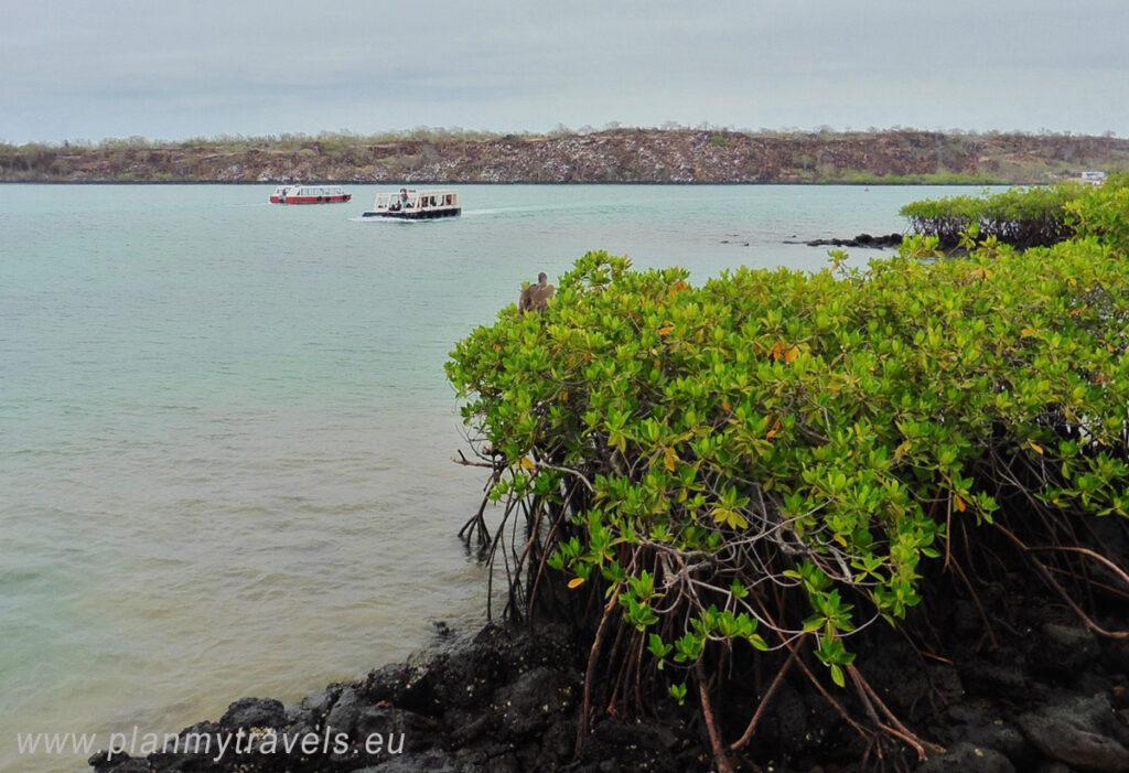 Galapagos Santa Cruz Island and Puerto Ayora