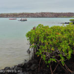 Galapagos Islands - face to face with mother nature