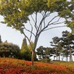 Daejeon Hanbat Arboretum ogród botaniczny