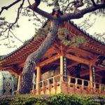 Seul Seul - świątynia Bongeunsa