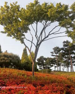Daejeon Hanbat Arboretum