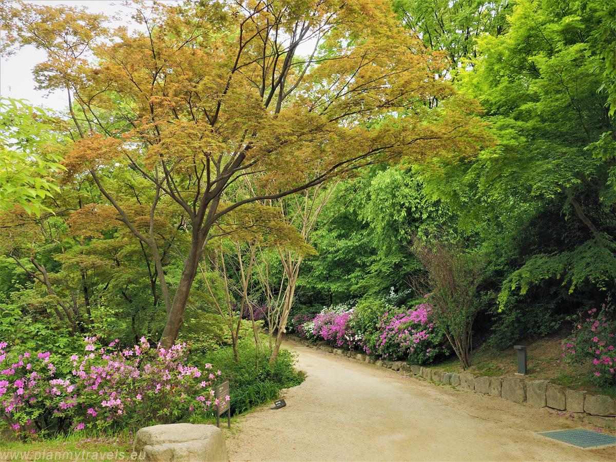 ogród w Pałacu Changgyeonggung Seul najważniejsze atrakcje przewodnik Korea Południowa