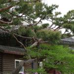 Seul Gyeongbokgung Palace, Seul - najważniejsze atrakcje