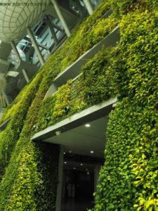 Korea Południowa, Seul City Hall wiszące ogrody