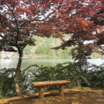 South Korea, Nami Island and Petit France,