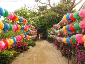 Korea Południowa – Lotus Festiwal Latarni