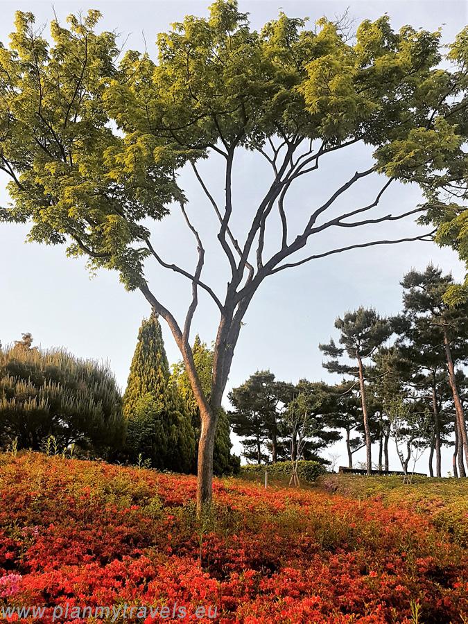 Daejeon_Hanbat Arboretum