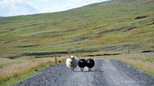 Islandia Wschodnia, droga 94