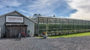 Iceland, Friðheimar farm