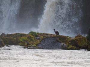 Islandia Północna, wodospad Godafoss