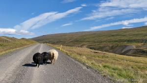 Iceland, Road no. 931